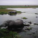 Wading elephants by pixiealice