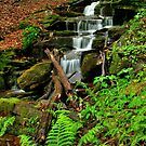 LOYALSOCK STATE FOREST  by MIKESANDY