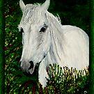 White Horse by JoMitch