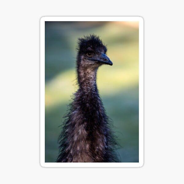 Old Man Emu (my first 5DS R post) Sticker