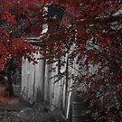 Autumn at Oakey Creek by Kate Howarth
