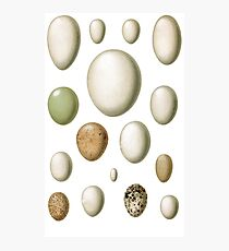 lovely egg collection Photographic Print