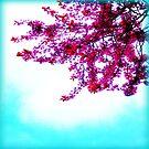 Sakura by EvePenman