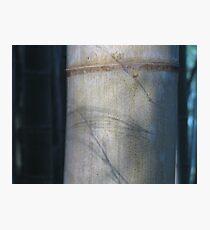 Evanescence Photographic Print
