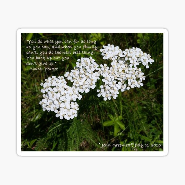 Words of Encouragement Floral Photography Sticker