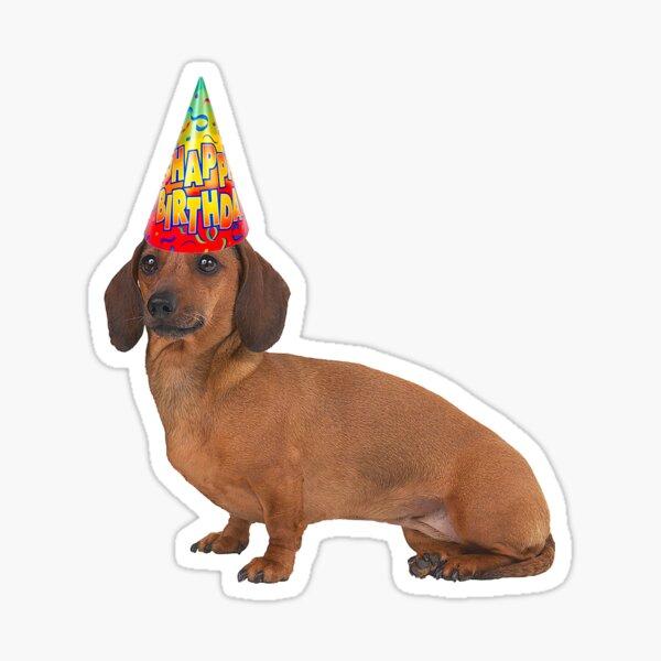 Smooth Dachshund Birthday Sticker