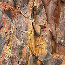 Tasmanian Abstract .3 by Alex Preiss
