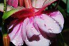 Fuchsia Pearls  by Tori Snow