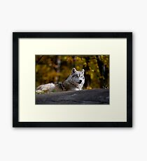 Chilaxing Framed Print