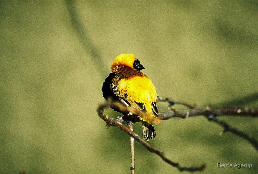The little yellow bird by Bente Agerup