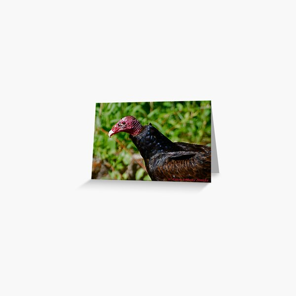 Grounded Turkey Vulture Greeting Card