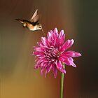 Chrysanthemum and Hummingbird by Kathy Weaver