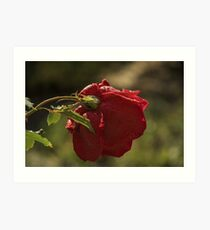 Rose Bokeh 1 Art Print