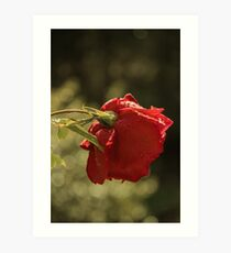 Rose Bokeh 2 Art Print