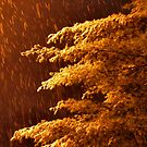"""""""A Snowy Evening in Knoxville (no.8, from this series)""""... prints and products  by Bob Hall©"""