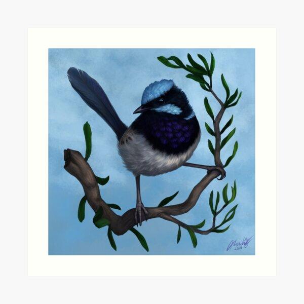 Male Superb Blue Fairy Wren Art Print