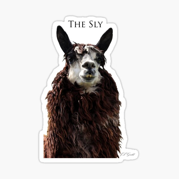 The Sly Sticker