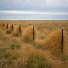 Grass along the fence line, Outback, NSW by Richard  Windeyer