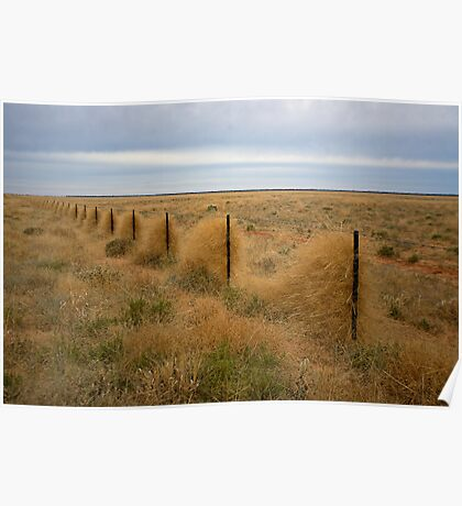 Grass along the fence line, Outback, NSW Poster