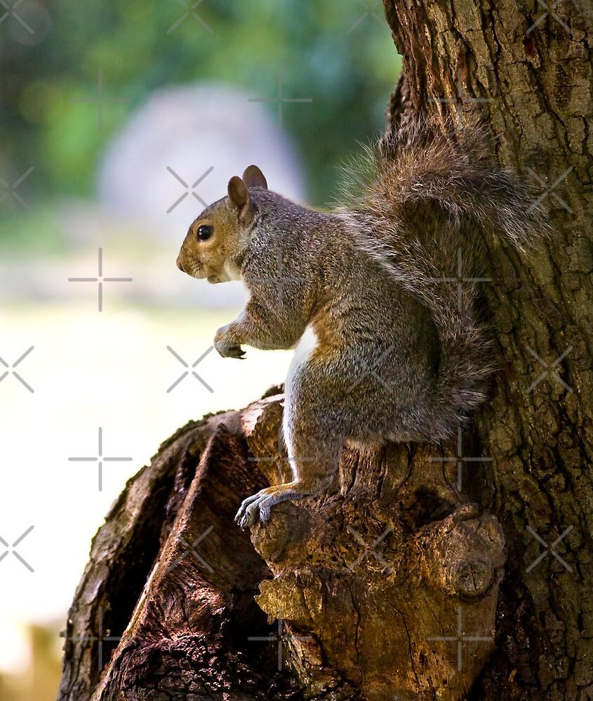 Secret Squirrel by Geoff Carpenter