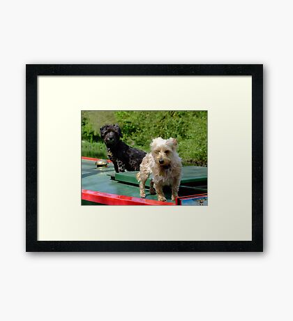 Canal canines Framed Print