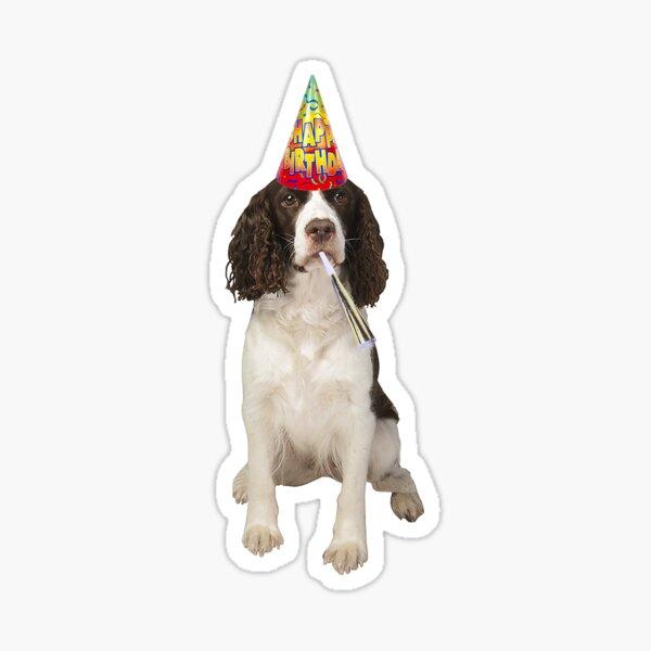 English Springer Spaniel Birthday Sticker