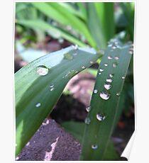 Vivifying moisture  Poster