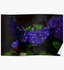 Jeweled Butterfly Closeup Poster