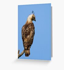 Changeable Hawk Greeting Card