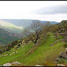 Cevennes National Park  by 29Breizh33