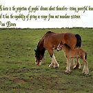 Clydesdale Baby 2 by Linda Eshom