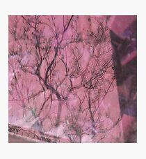 Reflect pink - Reflejo rojo Photographic Print