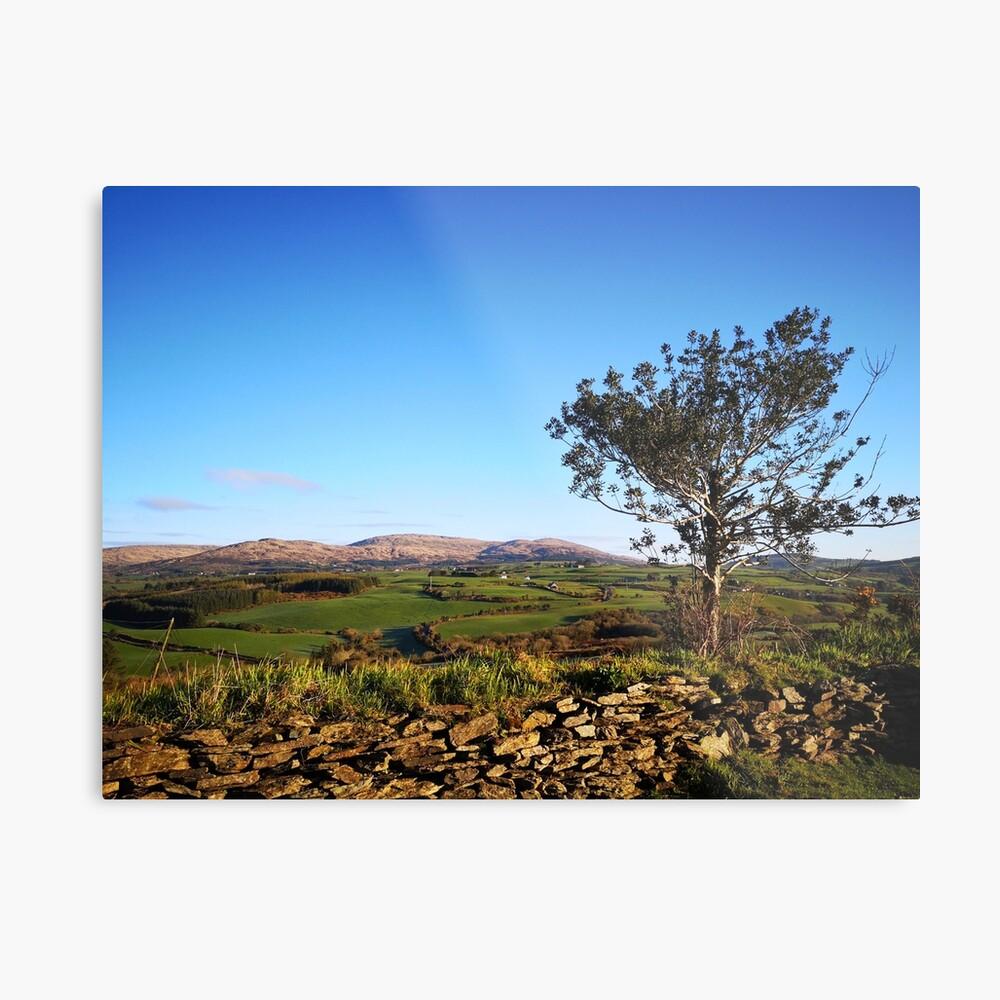 West Cork Tree Metal Print
