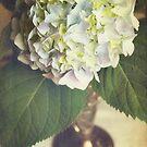 Hydrangea in a Vase by Jonicool