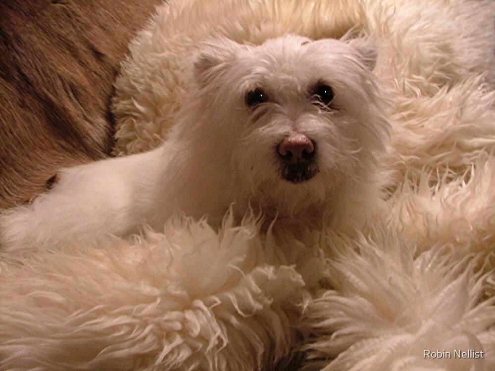 Alice in fur by Robin Nellist
