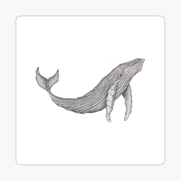 Megaptera Novaeangliae [Ted] Sticker