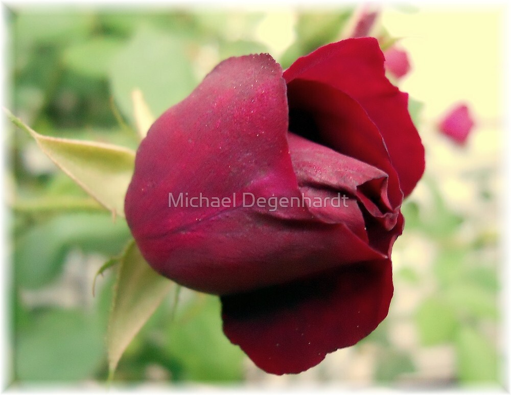 Rose Bud by Michael Degenhardt