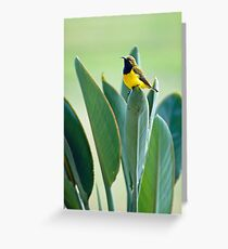 Sunbird Greeting Card
