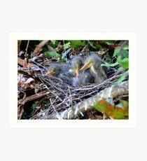 Birding ... Art Print