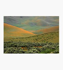 Wildflowers and Rolling Hills Photographic Print