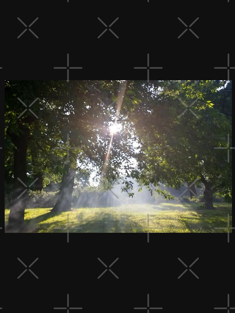 M.I. #11 |☼| Smoky Tree Sun Rays - Landscape Shot (Pearson Park) by Naean