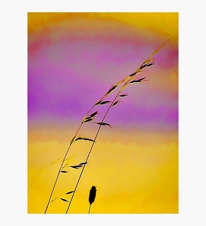 summer grass 17 Photographic Print