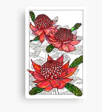 Australian Flower Series - Waratah Colour Canvas Print