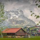 A Barn for all Seasons  by Viv Thompson