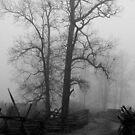 Foggy Trees of Trossle's Lane by OntheroadImage