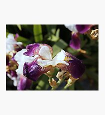 unfolding flower2 Photographic Print