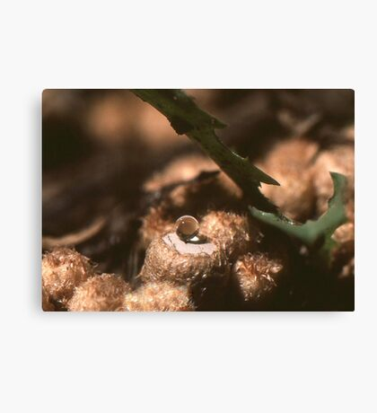 Suspended ball of water Canvas Print