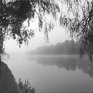 Mist by Kym Howard
