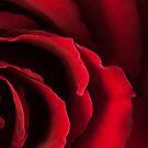 Sensual by Mia Rose