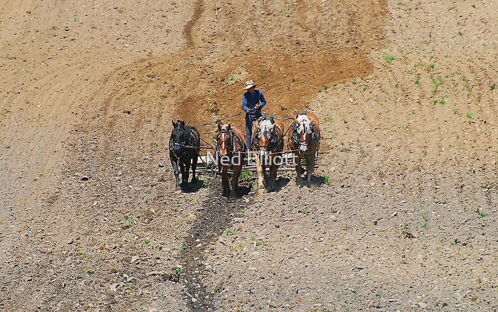Spring Plowing by Ned Elliott